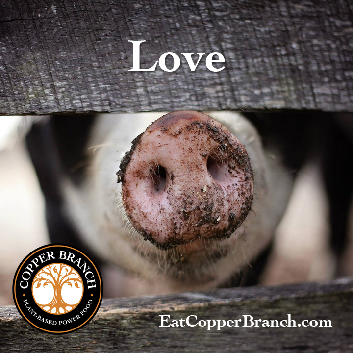 Copper Branch | Love
